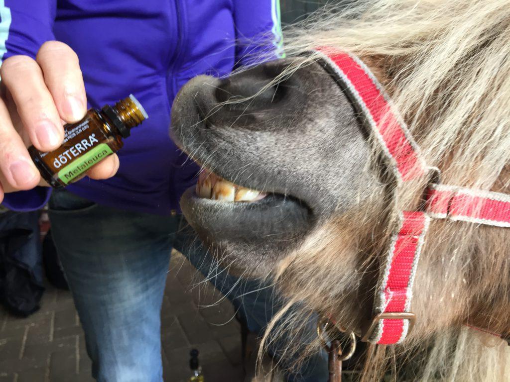 Essentiële oliën paard