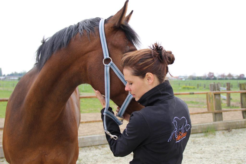 Wat is osteopathie voor paarden