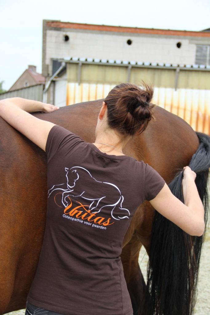 Osteopathische behandeling paard