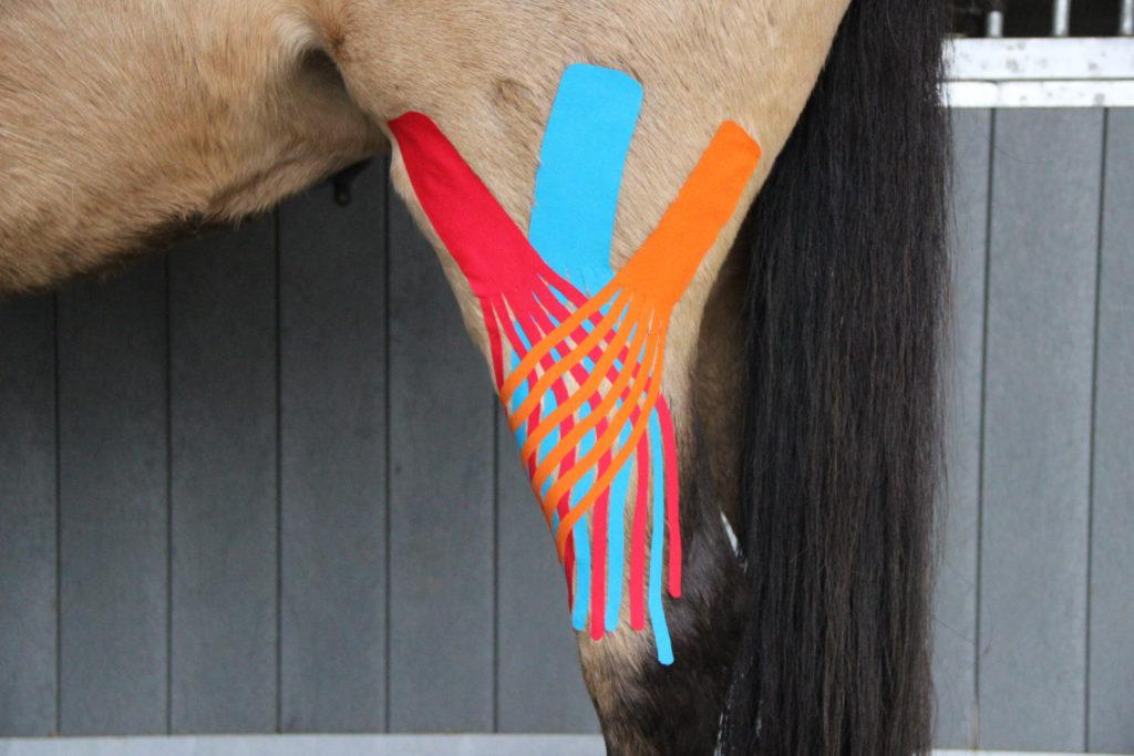 medical taping paard