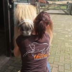 Unitas osteopathie paarden