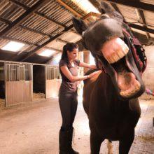 osteopathie paarden