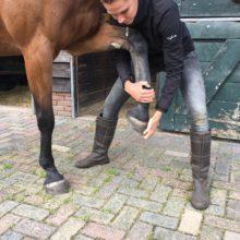 paard osteopathie