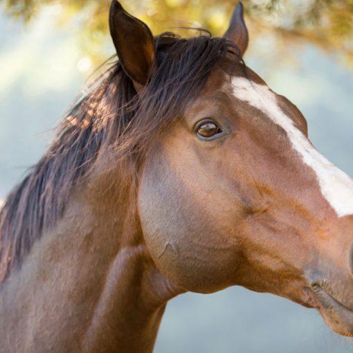Pijnsignalen paard