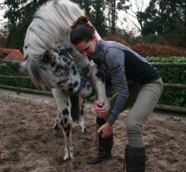 Samenwerking Unitas Osteopathie paarden