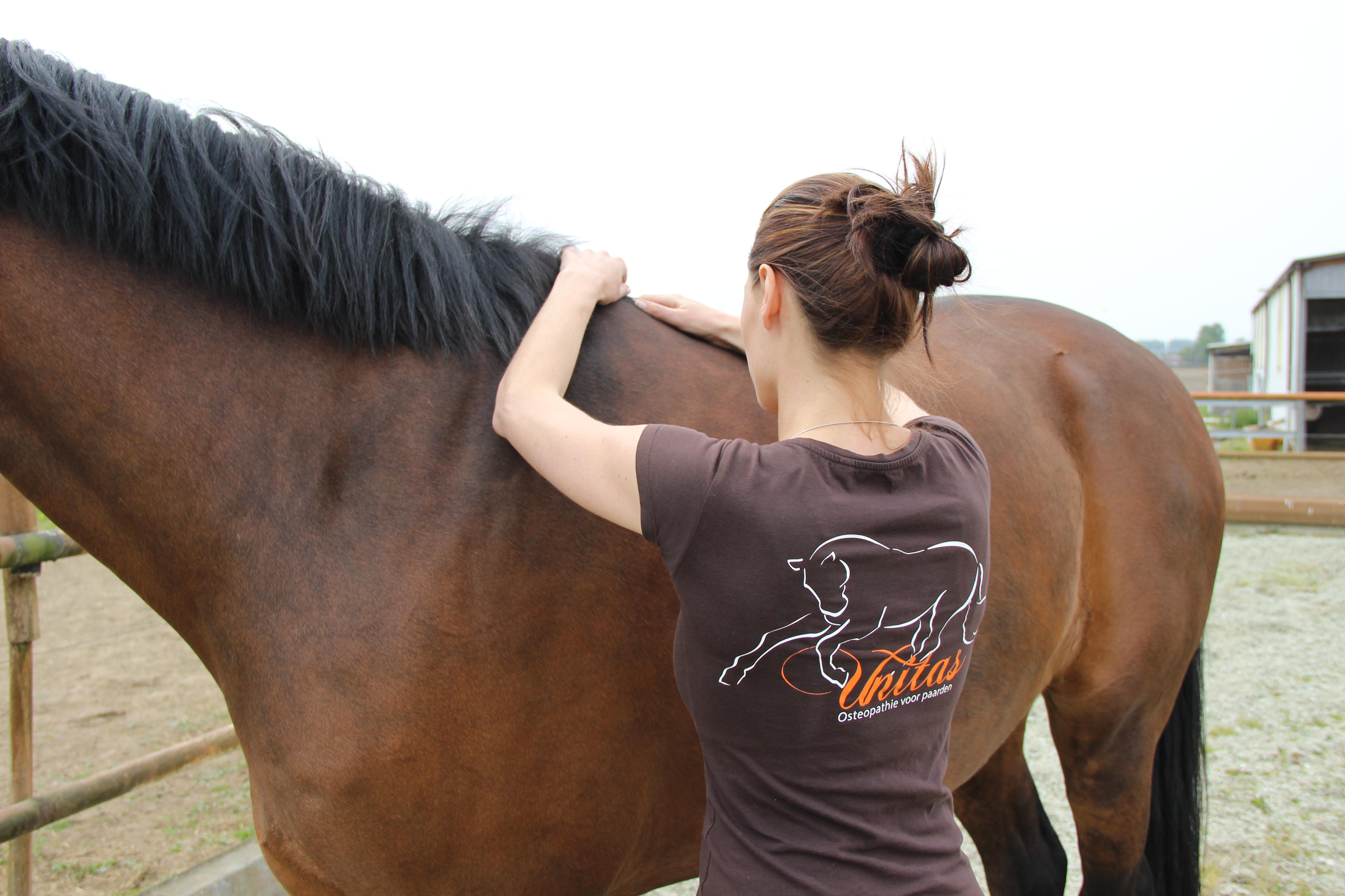 Unitas Osteopathie voor Paarden