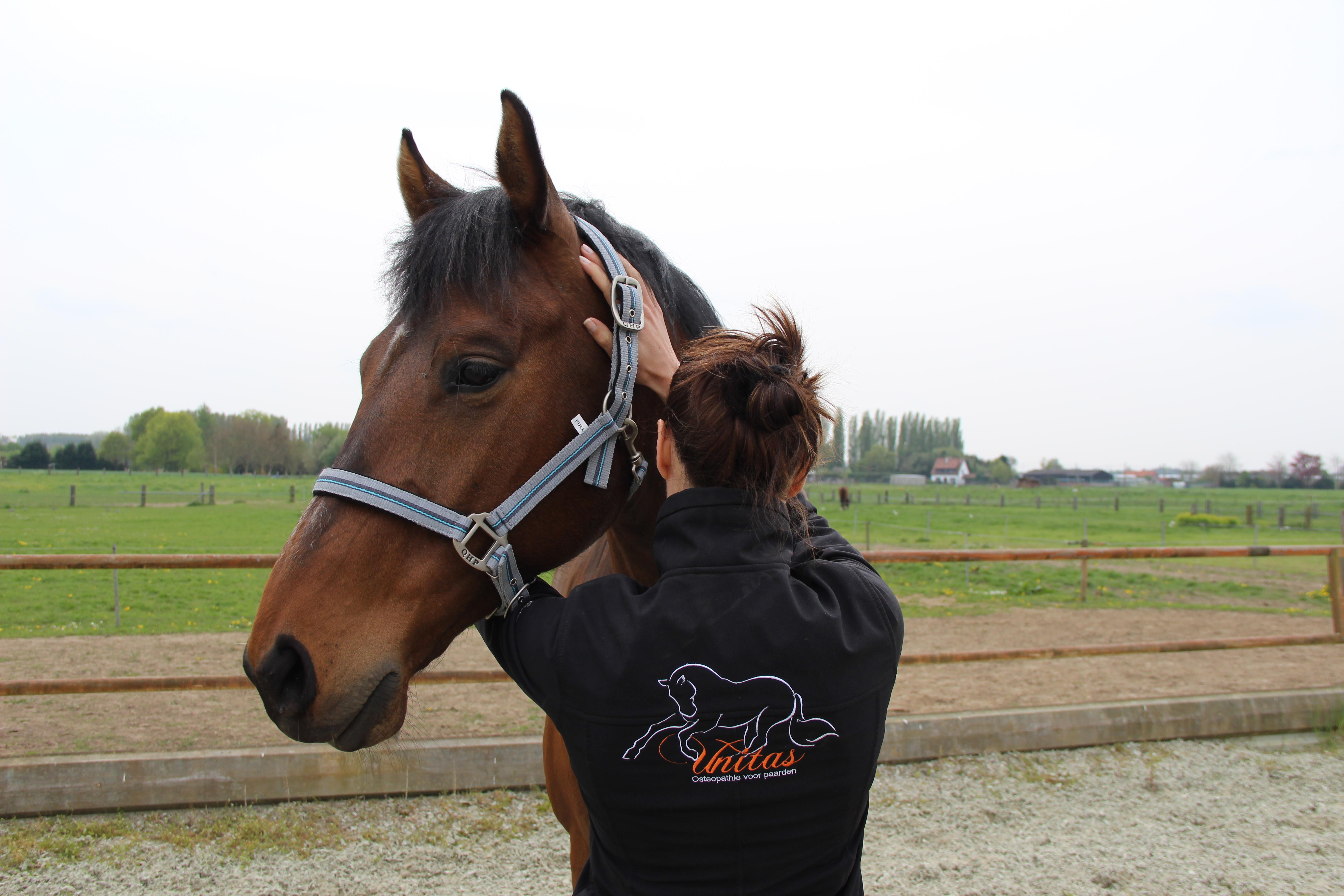 Osteopathie paard